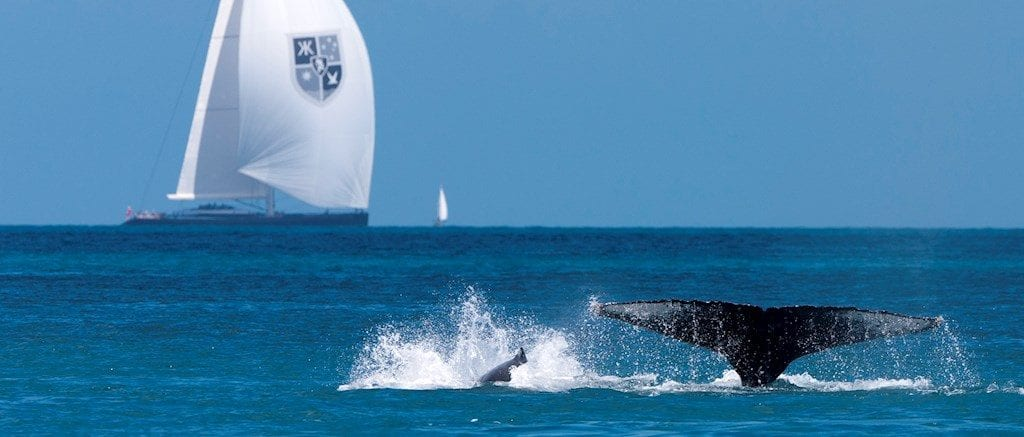 Image courtesy of Hamilton Island Race Week